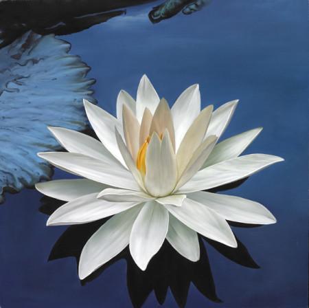 white-lotus-on-blue-water